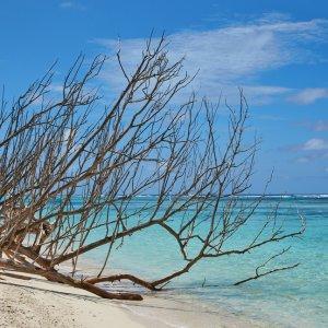 SC.Bird_Island_Privatinsel Der Blick auf einen großen Ast, der am Strand ins türkisblaue Meer ragt.