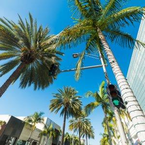 Blick auf Palmen von unten