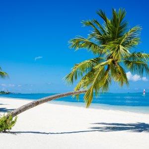 MV.Addu Atoll Palme Palme auf weißem Sandstrand vor traumhaftem blauen Ozean, Addu Atoll