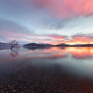 NZ.Wanaka Lake Tree Sunset Wanaka Lake bei Sonnenuntergang