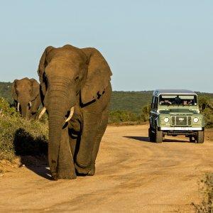 ZA.POI.Garden Route 1 Zwei Elefanten mit einem Safari Jeep