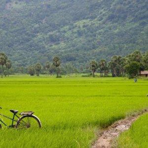 VN.Mekong-Delta_Chau_Doc_Reisfelder Der Blick auf grüne Reisfelder.
