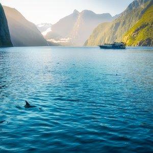NZ_dolphinmilfordsound