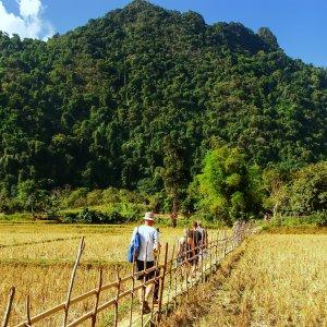 LA.Vang_Vieng_Aktivitäten Der Blick auf Menschen, die durch ein geerntetes Reisfeld wandern nahe Vang Vieng, Laos.