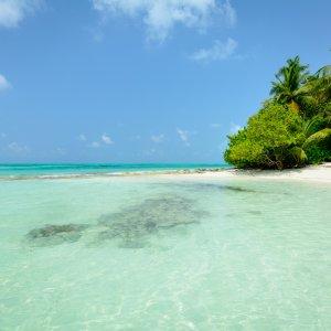 MV.Baa Atoll Tropische Szenerie mit weißem Sandstrand und türkisblauem Wasser am  Baa Atoll, Malediven