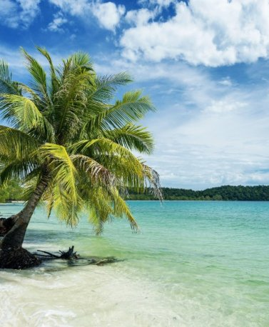 KHM.Koh Rong.Beach with palms