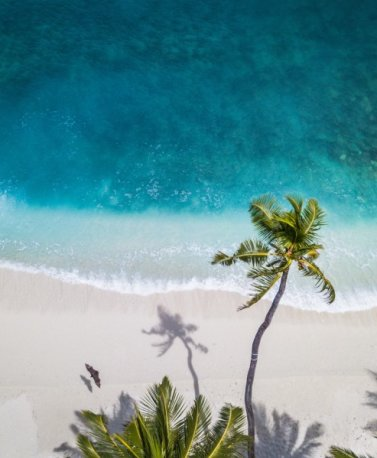 LKA.Malediven Palmen