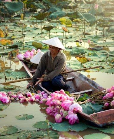 LAO. farmer.