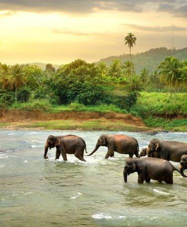 LKA.Elephants in water