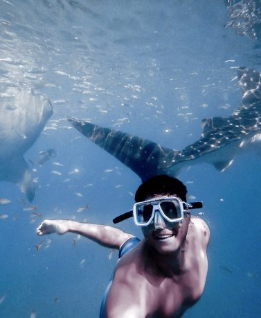 01_Swimming with Whale Sharks, Sri Lanka