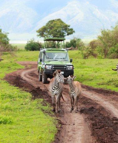 TZA.Serengeti.Safari
