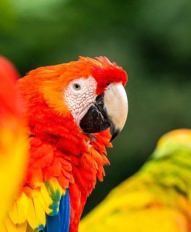 CRI.Ara bird