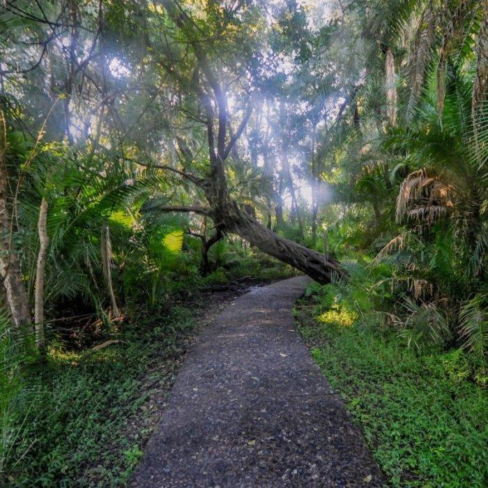 ZMB.Victoria Falls.Dschungel
