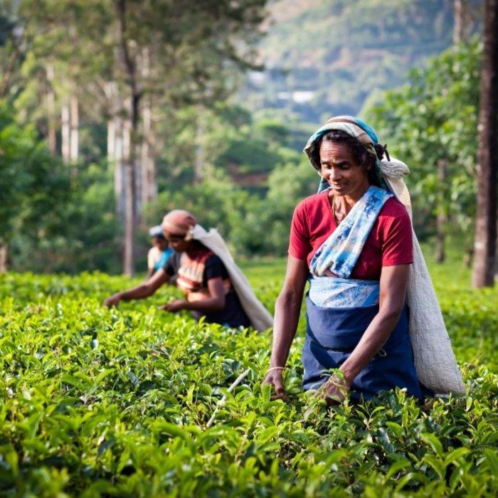 LKA.teeplantage frauen