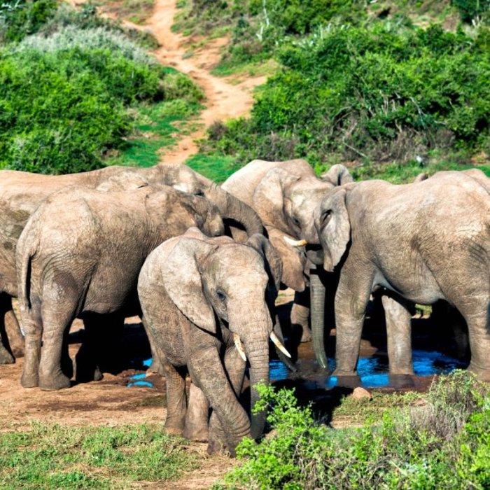 ZAF.Port Elizabeth.Addo Elephant NP.