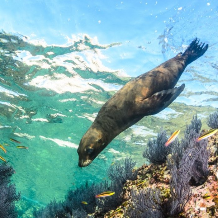 La Paz_Sea Lion