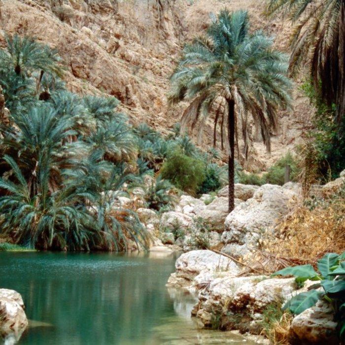 OMN.Wadi Shab.Oase