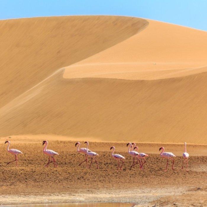NAM.Kalahari.Flamingos