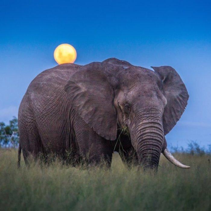 SWZ.Mlilwane Wildlife Sanctuary.Elefant