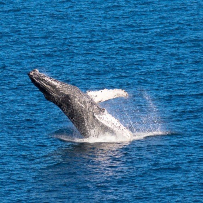 Loreto_whale