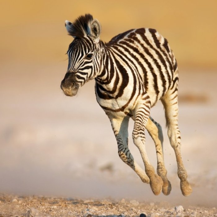 NAM.Sossusvlei.Zebra