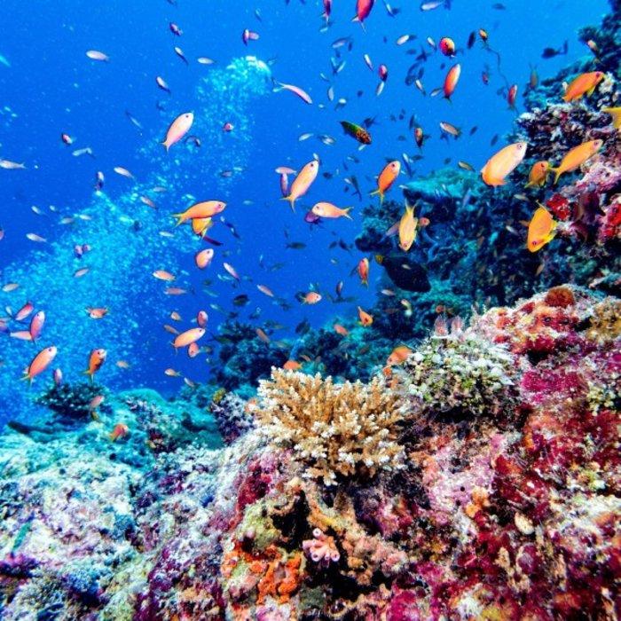 MDV.Fisches