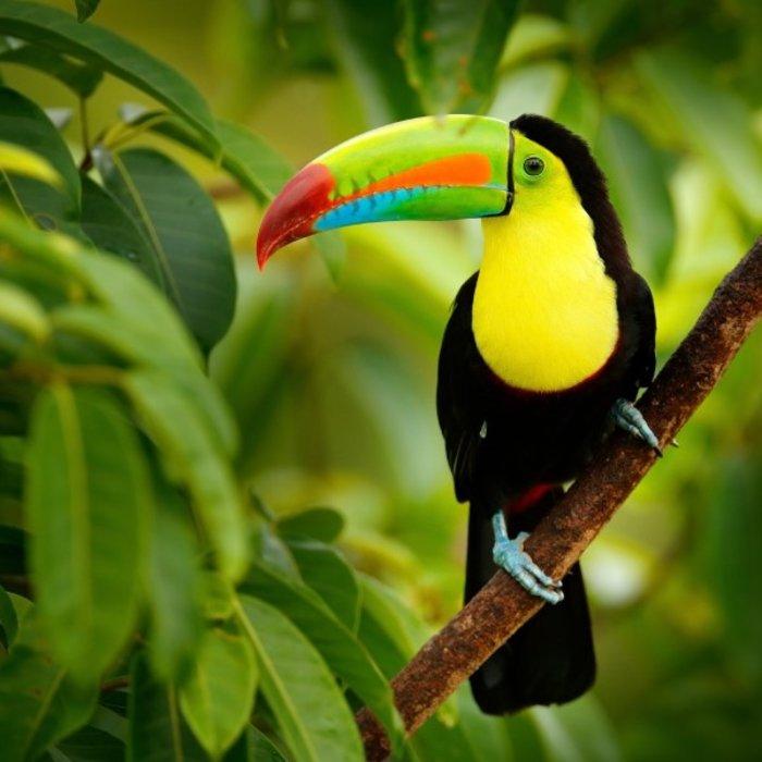 CRI.toucan