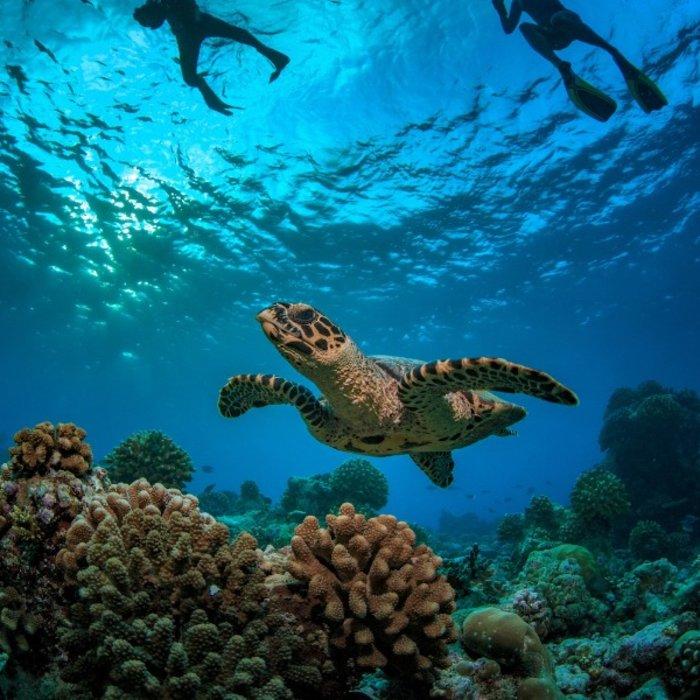 SYC.Praslin.Unterwasserwelt.Schildkröte