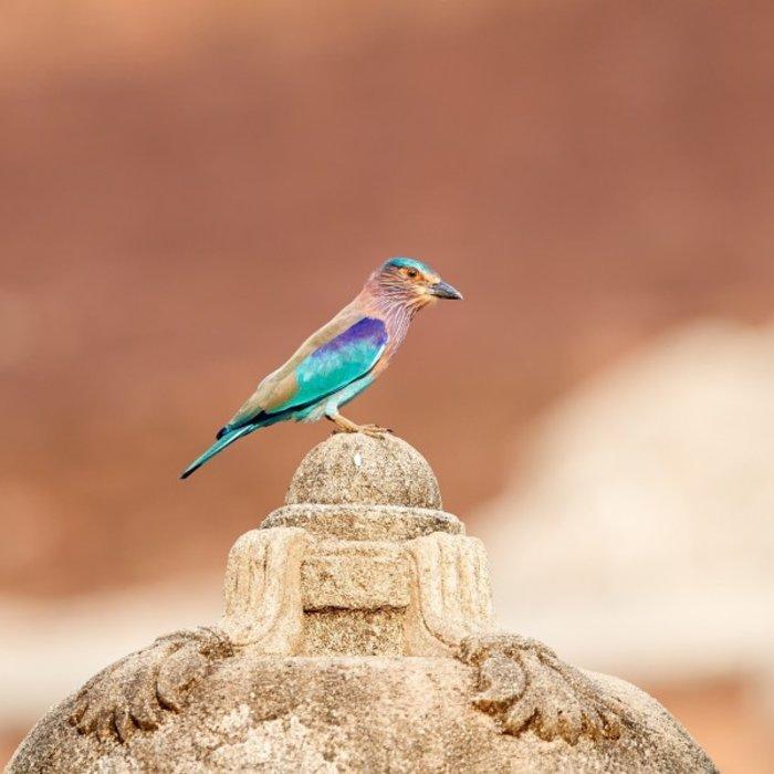 LKA.Anuradhapura bird
