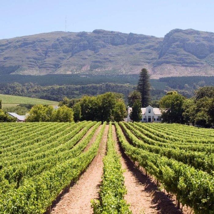 ZAF.Stellenbosch.Weinanbau mit Bergen