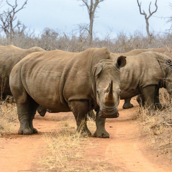 SWZ.Hlane Royal National Park.Rhino