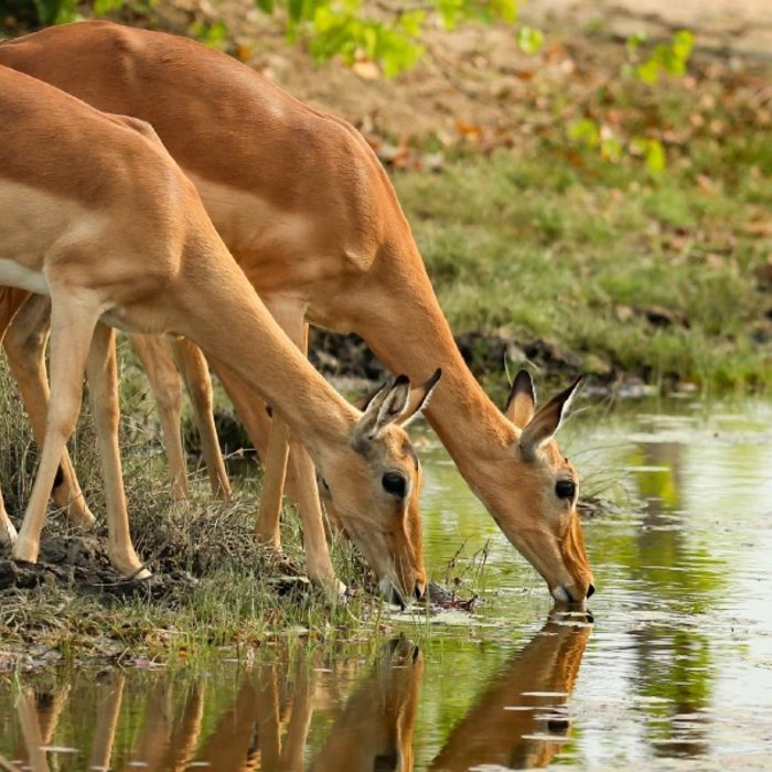 ZAF.Motswari Private Game Reserve_3