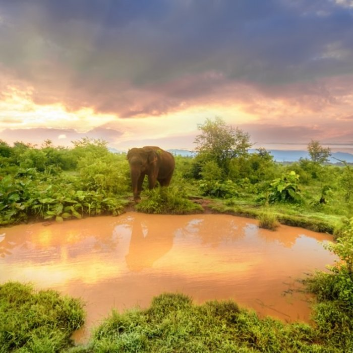 Udawalawe National Park 2