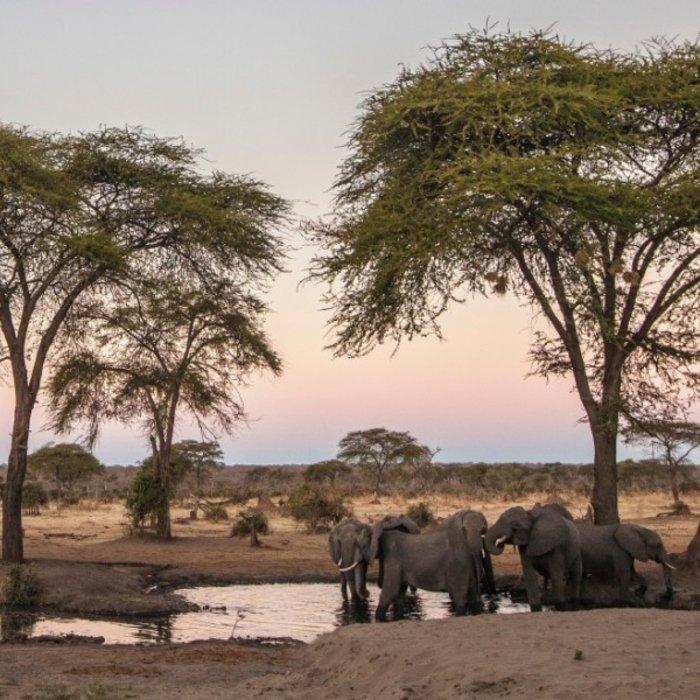 BWA.Chobe NP.Wasser Elefanten
