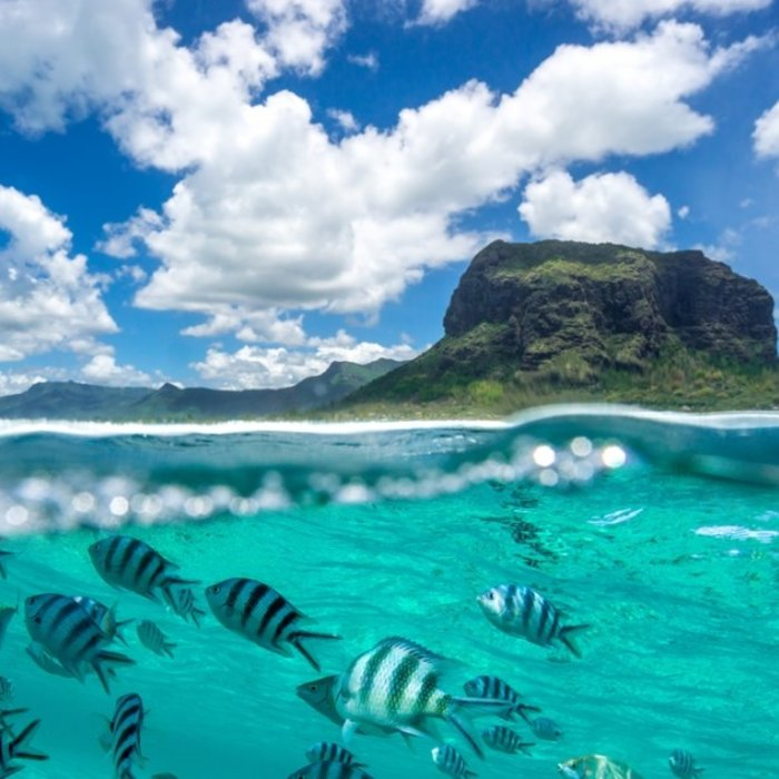MUS.Mauritius Fische & Berg