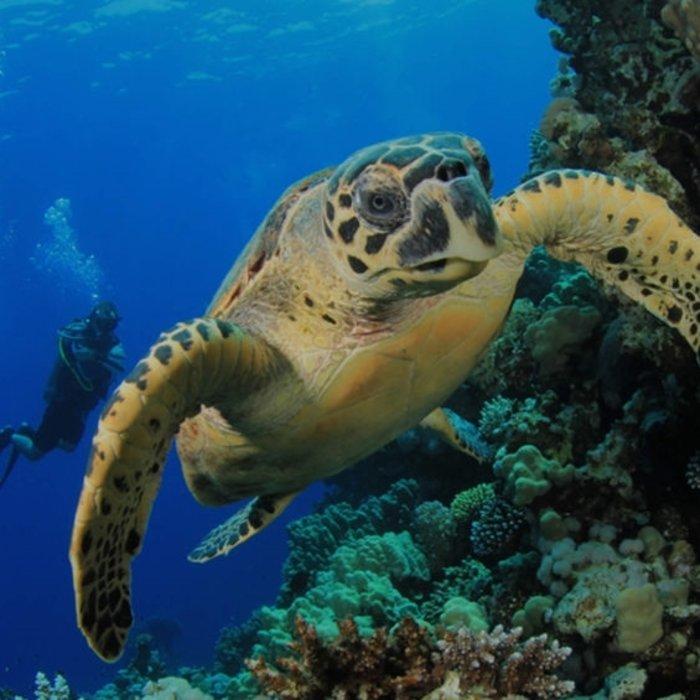 CRI.Isla Tortuga Snorkeling Tour