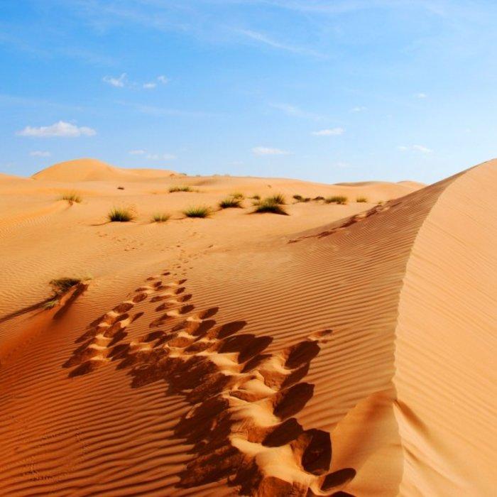 OMN.Wahiba Sands.Dünen mit Spuren