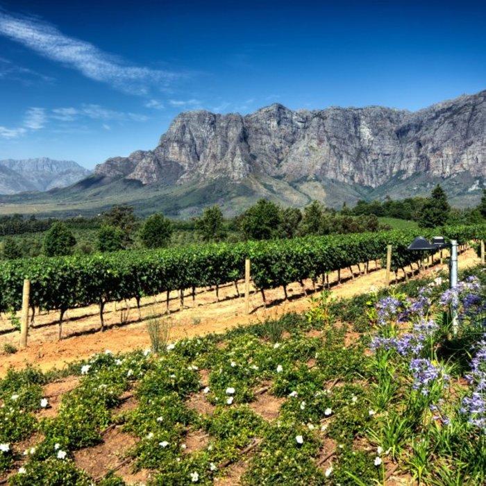 ZAF.Stellenbosch.Winelands Landschaft