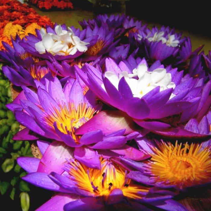 LKA.Kandy Flower Market