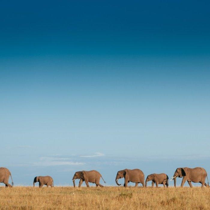 ZAF.Addo Elephant NP.Elephant family
