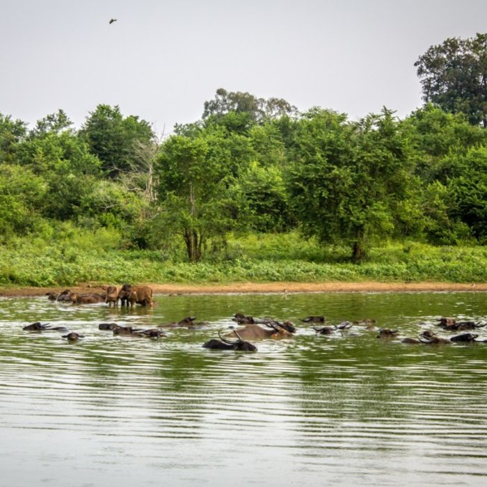 Udawalawe National Park 5