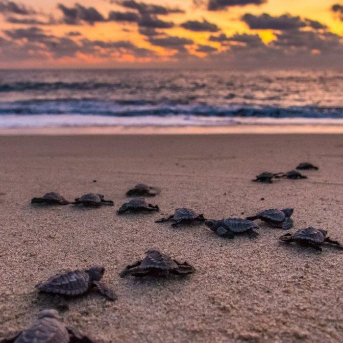 Puerto Escondido_sea tutles