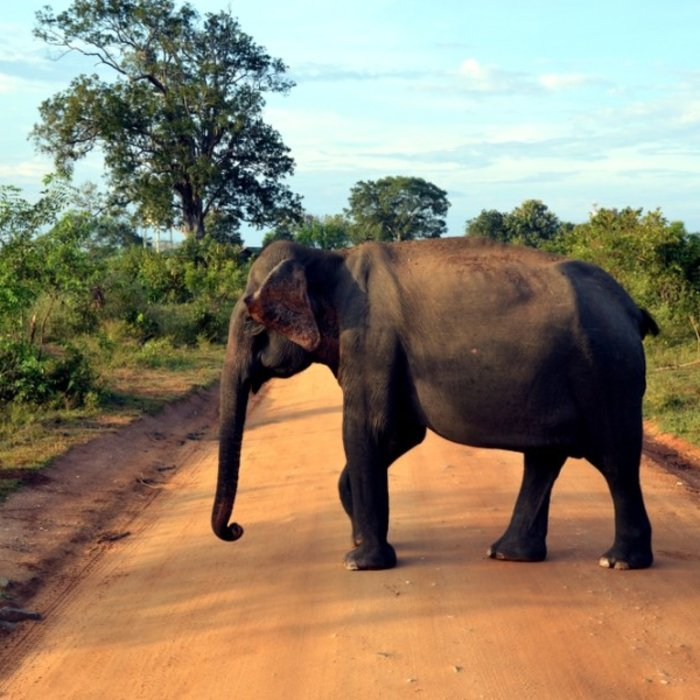 Udawalawe National Park 4