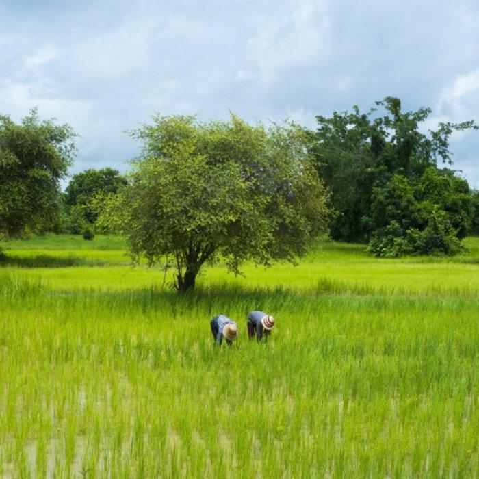Battambang II