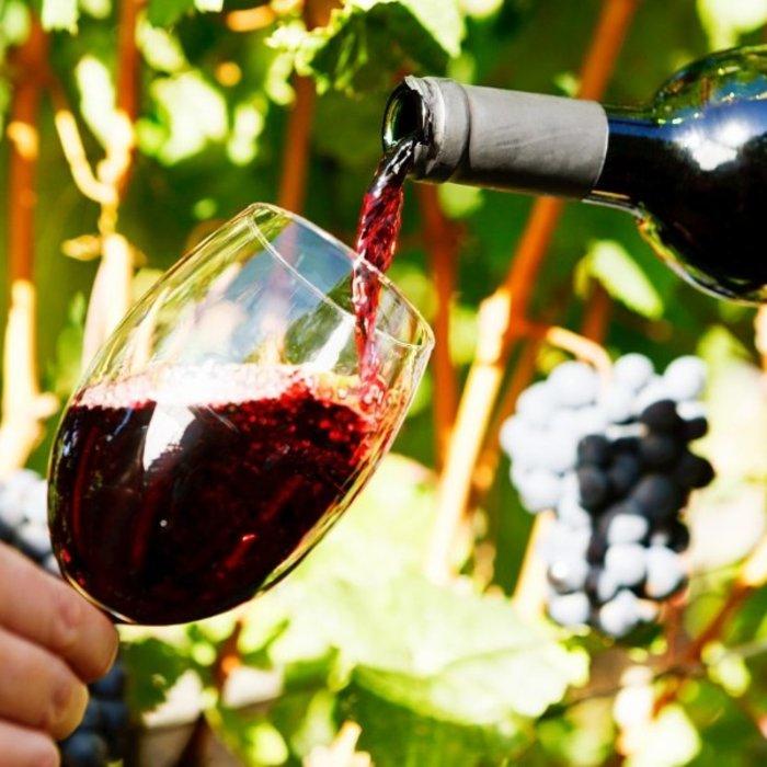 ZAF.Stellenbosch.Weinprobe in den Reben