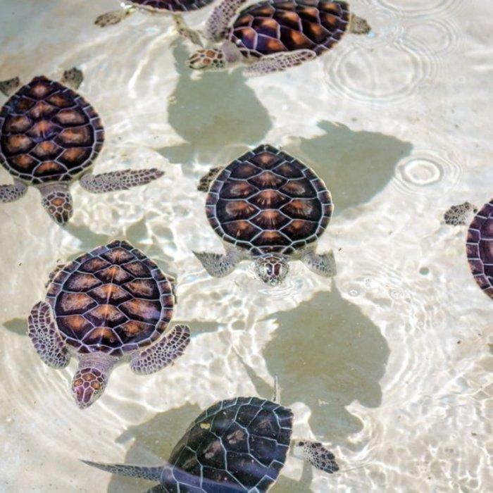 MEX.Tulum.Turtles
