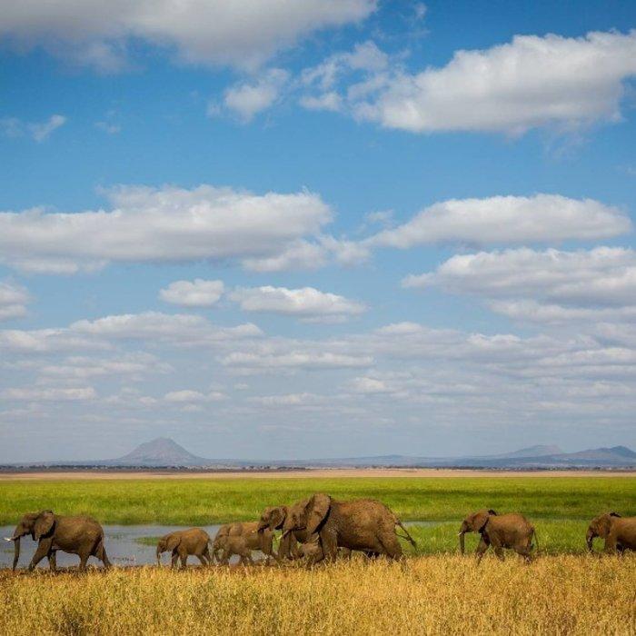 TZA.TarangireNationalpark.Elefanten