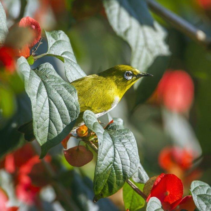 LKA.Ella bird
