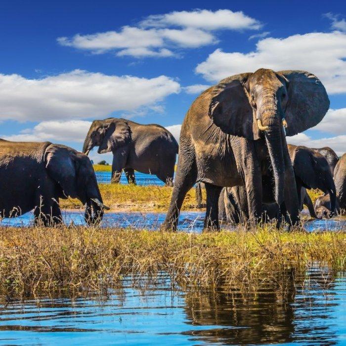 BWA.Chobe NP.Elefanten