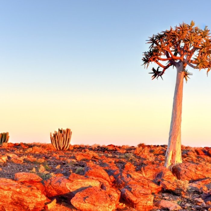 NAM.Fish River Canyon.Baobab Baum